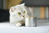 濕食是讓貓多喝水