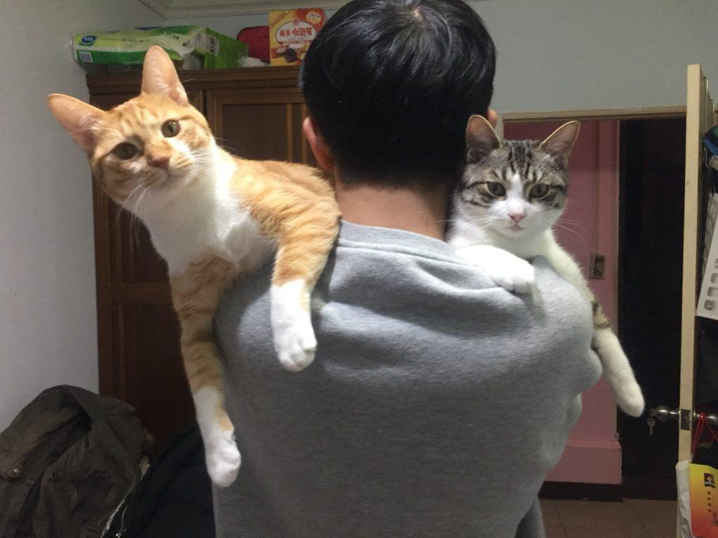 貓飼料推薦2019