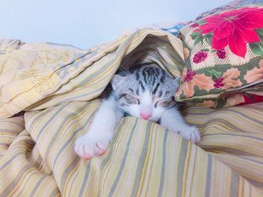 預防貓結石