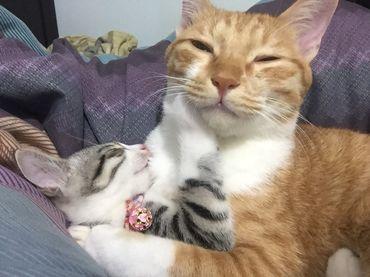 貓飼料 推薦好文