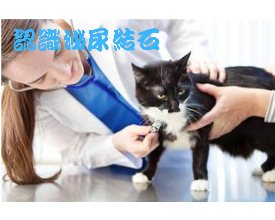 貓狗泌尿結石問題?認識、預防、治療及照護【2019精華篇】