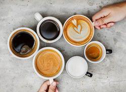 貓不能喝咖啡或茶