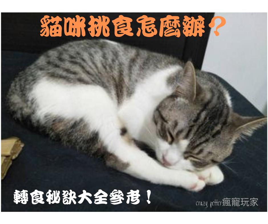 貓咪挑食怎麼辦?有系統的轉食秘笈