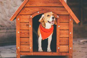寵物推車變換狗屋
