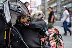 大型犬寵物推車舒適度與避震