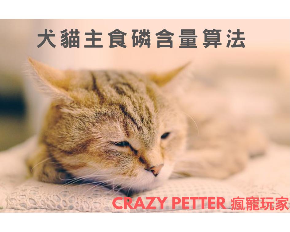 犬貓磷含量怎麼算?兩步驟快速學會|小撇步不藏私
