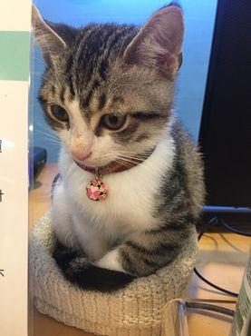 貓腎衰竭怎麼辦