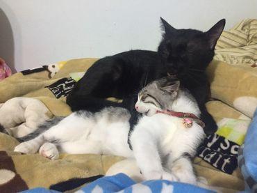 貓腎臟病與磷的控制