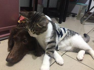 幫貓狗刷牙