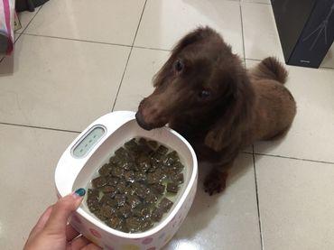 巔峰狗糧試吃