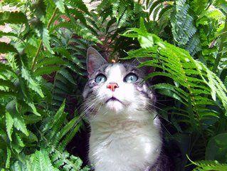 貓胰臟功能