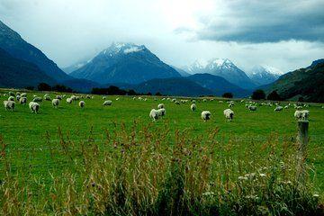 巔峰紐西蘭