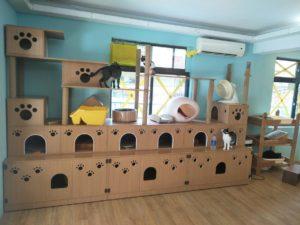 永和拼圖喵中途之家|志工心得分享,支持領養代替購買|貓咪領養