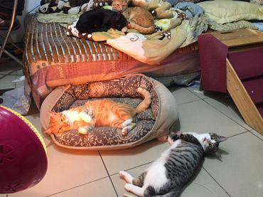 貓一天到底吃多少