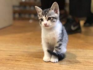幼貓怎麼養?貓奴六年-養貓筆記整理|飲食篇