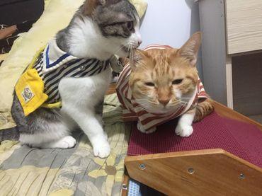 貓食八二法則