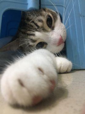貓用活水機