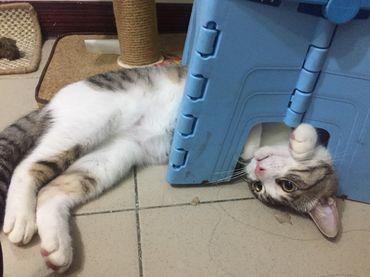 單/雙層貓砂盆