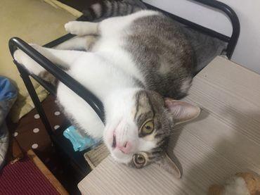 貓咪化毛膏