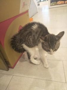 貓咪壓力/焦慮的來源,如何減輕貓咪壓力的應對方式