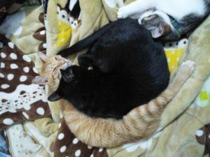 20種貓咪不舒服/生病的症狀,如果有以下症狀要提高警覺!