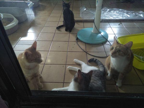 貓咪怎麼洗澡