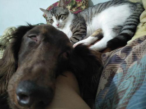 貓咪焦慮怎麼辦