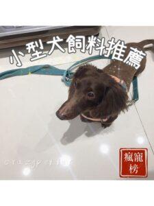 【2021瘋寵榜】狗奴15年十一款小型犬飼料推薦|賓狗試吃評價
