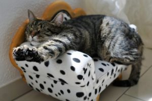 貓咪生病怎麼辦