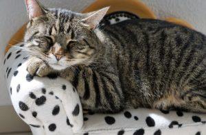 貓咪生病的症狀