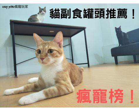 【瘋寵榜】貓奴六年七款貓副食罐頭推薦|2020整理精華版