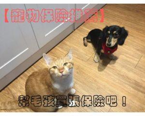 【寵物保險推薦】毛孩沒健保,保險超重要 東森保代寵物險