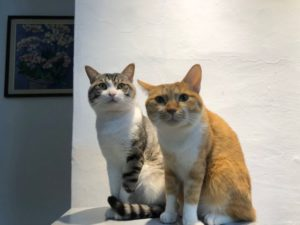 【瘋寵榜】貓奴六年11款高CP值貓罐頭推薦|分析整理版