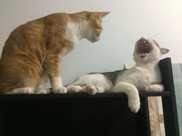 貓呼吸急促