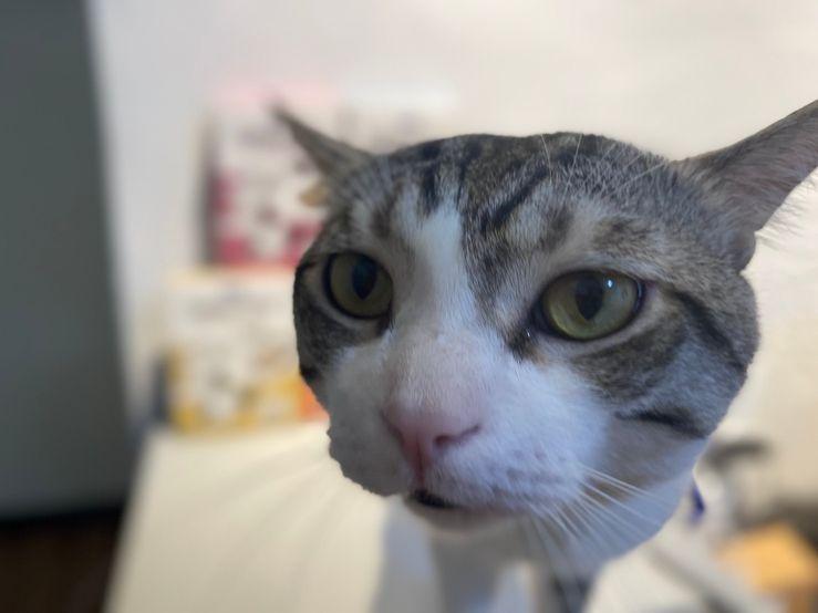 鮮境貓主食餐包