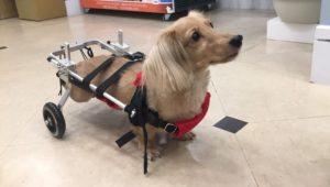 20種狗狗不舒服/生病的症狀,預防勝於治療,也幫毛孩買個保險吧!