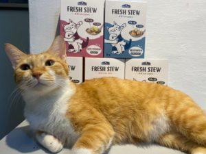 【瘋評比】倍力Fresh stew鮮境純肉貓咪主食餐包|五貓試吃客觀評價