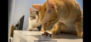 【貓咪狗狗零食推薦】純天然手工零食|薄片和耐咬零食推薦