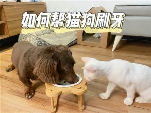 【狗狗貓咪刷牙教學】-牙齒健康很重要!試試輔助刷牙的潔牙凝露