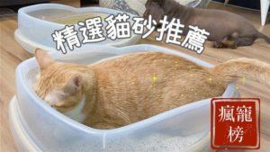 【瘋寵榜2020】貓奴六年十一大貓砂推薦|豆腐砂、松木砂、礦砂怎麼挑?