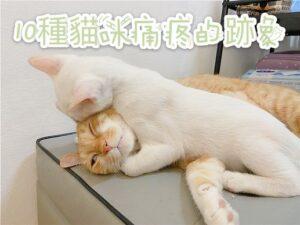 十大貓咪疼痛的跡象,不要錯過這些微妙的跡象了!