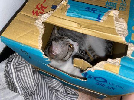 貓罐頭膠質