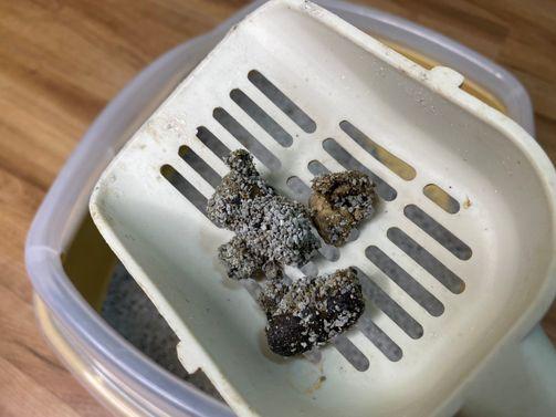 奧森貓礦砂推薦