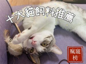 【貓飼料推薦2021】十五款貓飼料試吃評價-教你怎麼挑!瘋寵榜