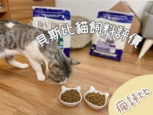 【瘋評比】貝斯比貓飼料推薦|重視原料及生產方式,五貓試吃評價
