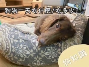 狗狗一天吃多少/吃什麼?養狗15年的經驗分享給你!