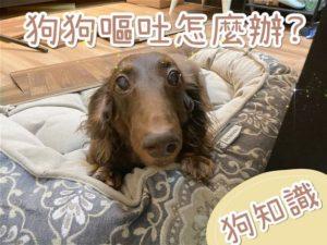 狗嘔吐/吐黃水怎麼辦?為何會嘔吐?愛狗你一定要看的知識