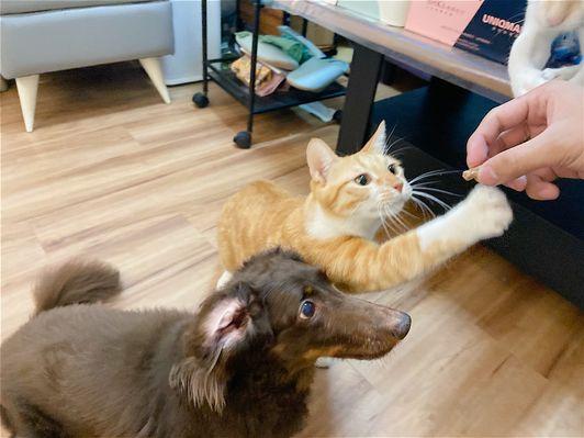 貓亂尿怎麼解決