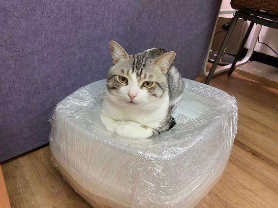 貓亂尿怎麼辦