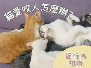 【貓行為知識】貓愛咬人/抓人怎麼辦?貓奴必看,六年經驗分享